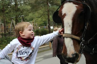 met a horse